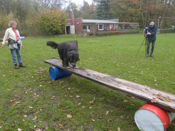 %GSV-Friedrichsort Training der Unterordnung und Gewandheit für Rettungshunde