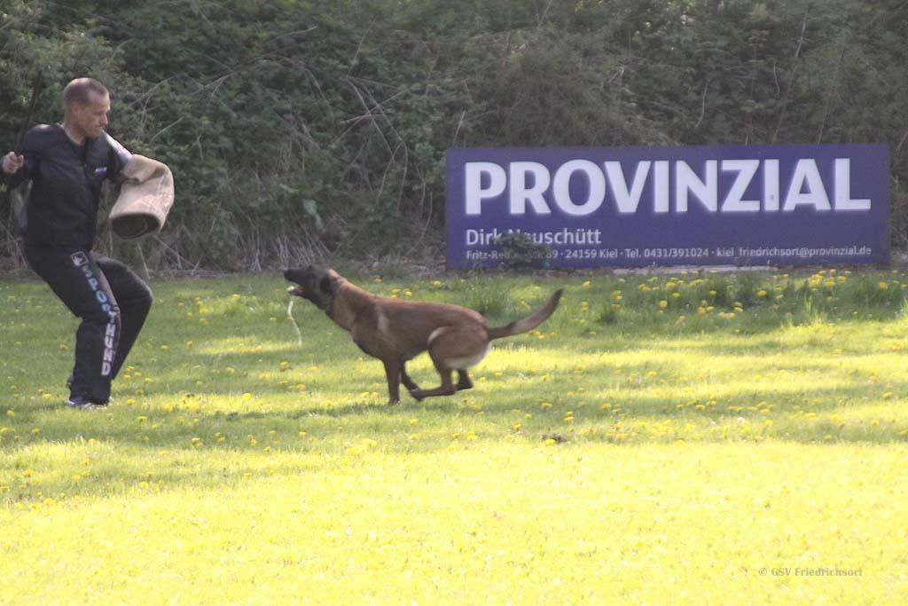 %GSV-Friedrichsort Bilder der Frühjahrsprüfung 2018