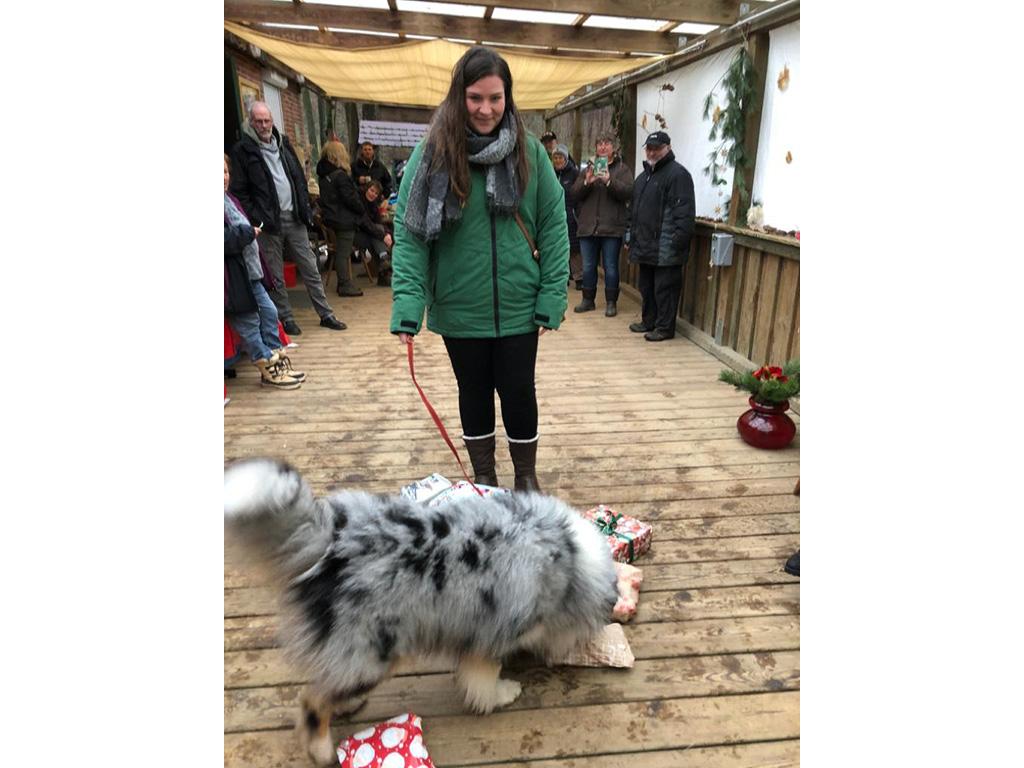 %GSV-Friedrichsort Das war die GSV Hundeweihnacht 2019